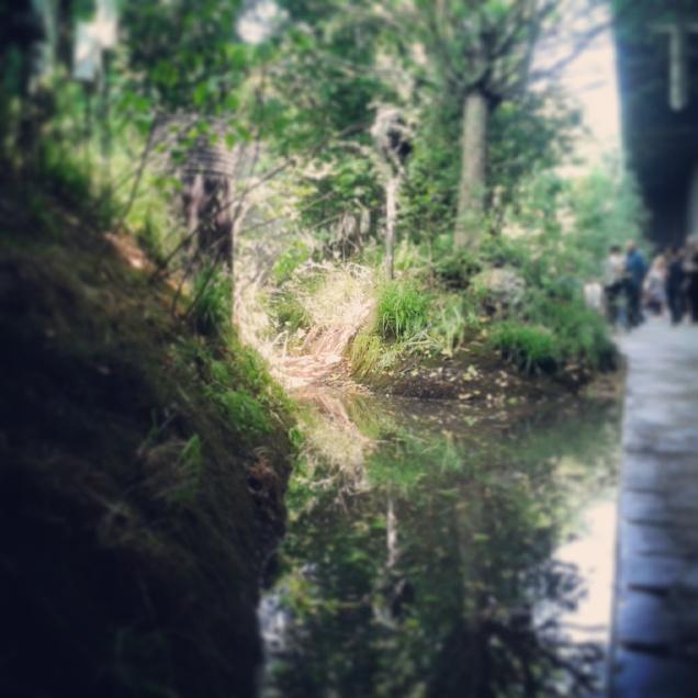 Una parte del bosco