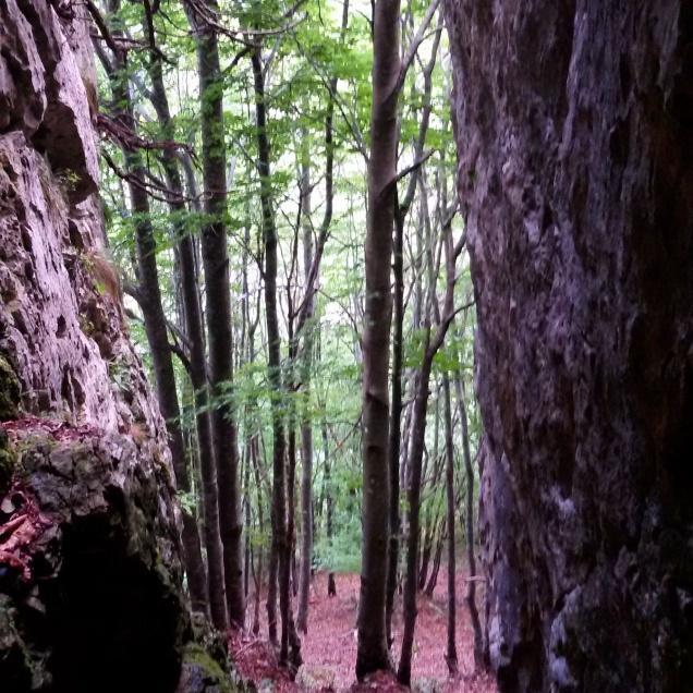 Uno sguardo sul bosco durante la passeggiata