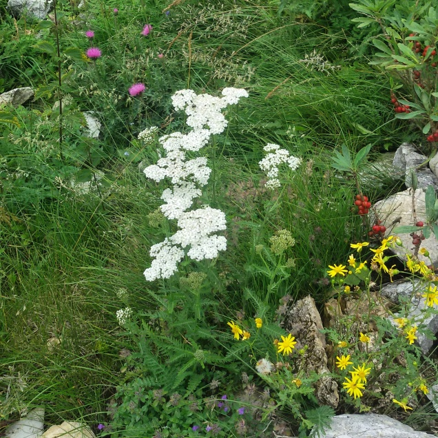 Alcuni dei fiori coloratissimi che ho visto durante la giornata