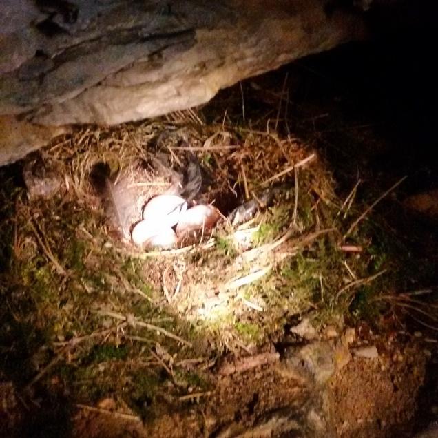 Un piccolo nido che ho notato all'interno dell'ultima galleria