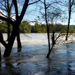 Il fiume Isonzo ingrossato dalla forti precipitazioni