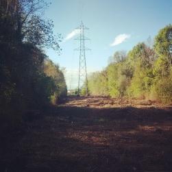 Disboscamento in corso