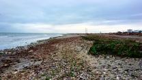 Conchiglie e alghe sulla spiaggia
