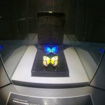 Bordano, Casa delle Farfalle e Forte di Monte Festa 14