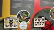 Bordano, Casa delle Farfalle e Forte di Monte Festa 2